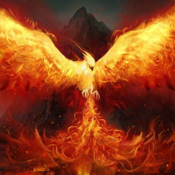 Phoenix – rise from the ashes…